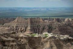 Chèvres de montagne, sommets, buttes et flèches, parc national de bad-lands, écart-type Photos libres de droits