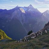Chèvres devant des montagnes photos stock