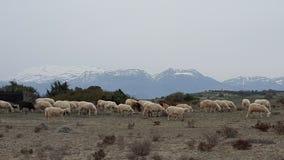 Chèvres sauvages Images libres de droits