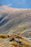 Chèvres sauvages dans les montagnes Photo libre de droits