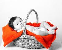 Chéri dans le panier Image stock