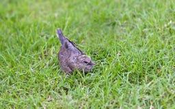 Chéri des oiseaux de colombe Photo stock