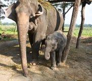 Chéri et mère d'éléphant Photo stock