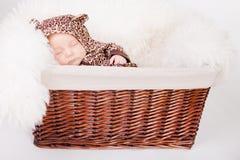 Chéri nouveau-née dans un panier dans la suite de léopard Photographie stock