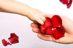 Chéri touchant les pétales roses Image libre de droits