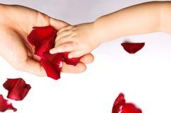 Chéri touchant les pétales roses Photos libres de droits
