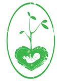 Chéri verte Images stock
