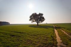 Chêne (automne, un coucher du soleil) Photographie stock libre de droits