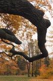 Chêne branches-1 Photos libres de droits