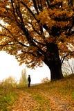 Chêne d'automne Photographie stock
