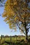 Chêne d'automne/automne Image stock