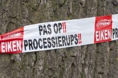 Chêne d'avertissement Processionary sur l'arbre Images libres de droits