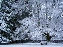 Chêne dans la neige photographie stock libre de droits