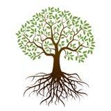 Chêne de couleur illustration de vecteur