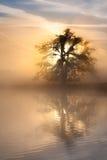 Chêne de lever de soleil Images stock
