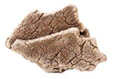 Chêne de liège d'écorce sec Images stock