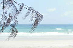 Chêne de mer sur la plage Photo stock