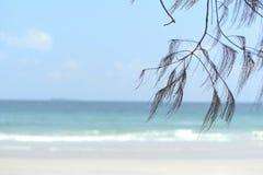 Chêne de mer sur la plage Image libre de droits