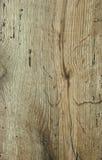 Chêne de vintage Photo libre de droits