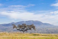 Chêne et paysage de Holm Image libre de droits
