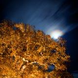 Chêne la nuit avec des étoiles sur le sky.GN Image libre de droits