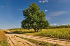 Chêne près des routes Photos stock