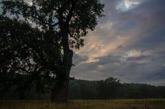 Chêne puissant au lever de soleil image libre de droits