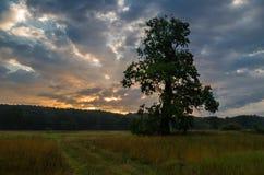 Chêne puissant au lever de soleil photos libres de droits