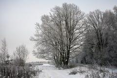 Chêne puissant congelé de forestThe sombre d'hiver, les branches des arbres couverts de neige et gel photographie stock libre de droits
