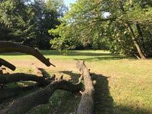 Chêne puissant tombé en Pologne orientale photo libre de droits