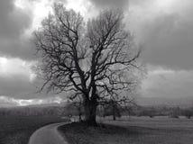 Chêne seul en horizontal de l'hiver Photographie stock