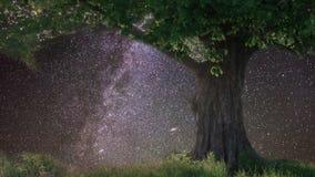 Chêne seul sous le ciel étoilé clips vidéos