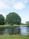Chêne sur le côté d'une rivière en soleil photo stock