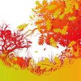 Chênes, à feuilles caduques et forêt Photos stock