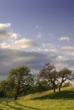 Chênes au coucher du soleil Images stock