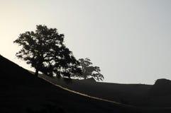 Chênes contre éclairés de la Californie photographie stock