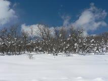 Chênes de Surub dans la neige Photos stock