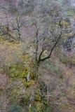 Chênes et arbres de châtaigne pluss âgé Images libres de droits