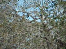 Chênes majestueux photo libre de droits