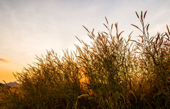Chíbese con el sol 8 Imagenes de archivo