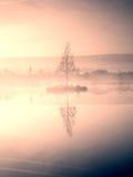Chíbese el árbol del anmd en la isla en el centro del lago Mañana púrpura Imagen de archivo