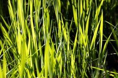 Chíbese el fondo macro lleno en productos verdes de las impresiones 50,6 megapíxeles fotografía de archivo libre de regalías