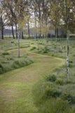 Chíbese la bobina de la trayectoria a través de los árboles de abedul jovenes Hoevens, Países Bajos Foto de archivo libre de regalías