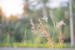 Chíbese la flor Fotografía de archivo libre de regalías