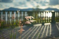 Chíbese la flor Foto de archivo libre de regalías