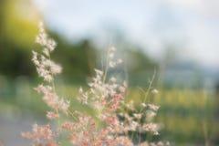 Chíbese la flor Imágenes de archivo libres de regalías