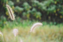 Chíbese la flor Imagen de archivo libre de regalías