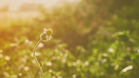 Chíbese la flor foto de archivo