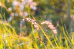 Chíbese la luz del fondo borroso sol poniente de un bokeh del prado enorme Foto de archivo libre de regalías