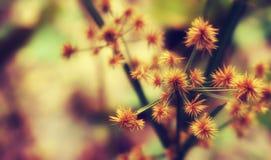 Chíbese la naturaleza de la primavera del extracto del efecto del filtro del vintage de la flor, rel Foto de archivo libre de regalías